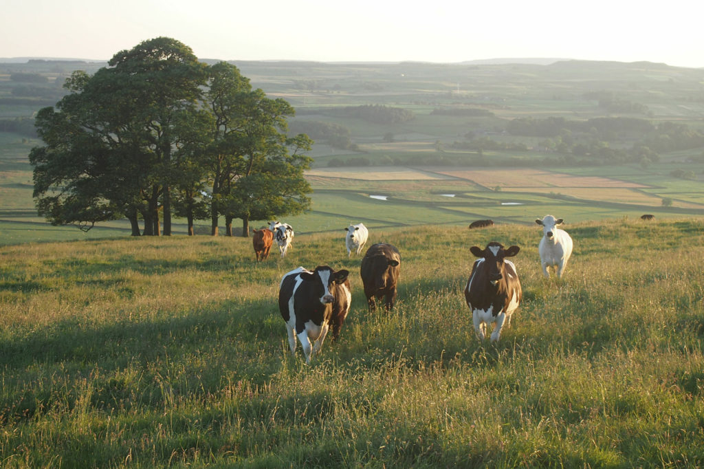La Vaca en la Habitación: el Cambio Climático y la República Argentina